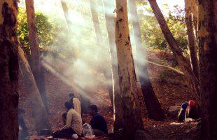 Picnick in de bossen